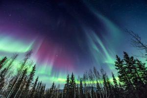 Aurora Borealis in Canada over trees